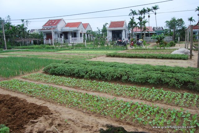 A small farm outside of Hoi An.
