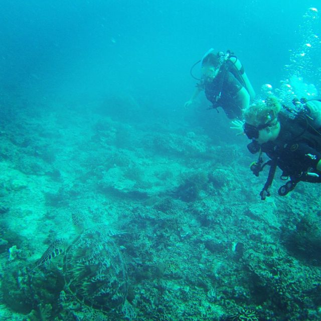 tbt to diving with giant sea turtles in the Gilihellip