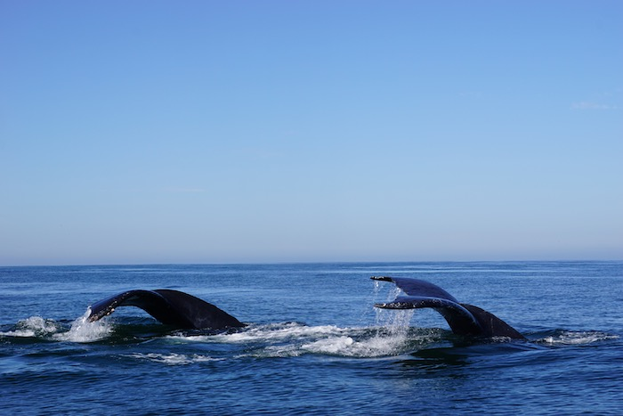 things to do in puerto vallarta whale watching
